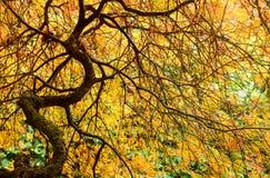 Countryside vegetation Royalty Free Stock Image