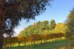 Countryside view. View of a countryside estate with big olive tree, vineyard and tower of main farmhouse on the back hidden by a grove Stock Images