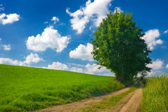 Countryside view. Stock Images