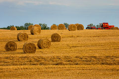 Countryside view of cultivated fields, harvest, Poland , Europe Stock Photo