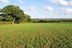Countryside View of English Farmland Royalty Free Stock Photos