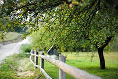 Countryside view with a fence and a tree. Countryside view: garden  with a fence and a tree Stock Photos