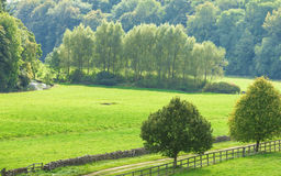 Countryside view of green field. Nature landscape Stock Images