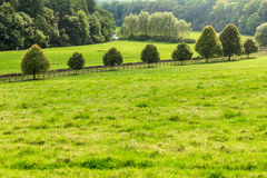 Countryside view of green field. Nature landscape Royalty Free Stock Photos