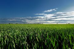 Countryside view of the meadows and cultivated fields Stock Photo