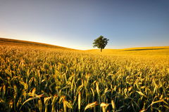 Countryside view of the meadows and cultivated fields Royalty Free Stock Image