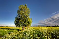 Countryside view of the meadows and cultivated fields Royalty Free Stock Photography