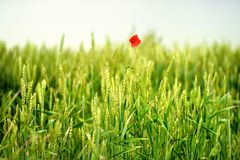 Countryside view of the meadows and cultivated fields Stock Photography