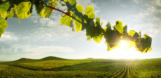 Countryside. View of nice italian sunny summer countryside landscape Royalty Free Stock Photography