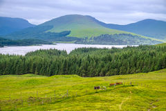 Countryside view in  Scotland. Royalty Free Stock Image
