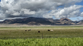 Countryside view of tibetan Stock Photography