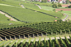 Countryside with vineyard Royalty Free Stock Images