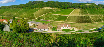 Countryside and vineyards in Chablis area. Panoramic view of countryside and vineyards in Chablis area, Burgundy, France royalty free stock image