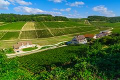 Countryside and vineyards in Chablis area. View of countryside and vineyards in Chablis area, Burgundy, France royalty free stock photo