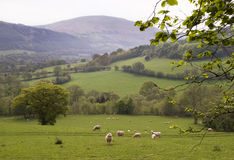 Countryside in Wales Royalty Free Stock Photography
