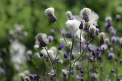 Countryside wildflowers royalty free stock images