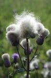 Countryside wildflowers royalty free stock photo