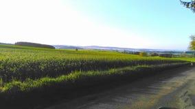 Countryview在早晨 库存照片