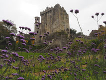 County Cork, Ireland with Blarney Castle Royalty Free Stock Photography