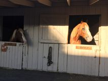 California Mid State Fair San Luis Obispo County Horse heads in stalls. County fair, rural and rustic wooden barn with two chestnut horses sticking their heads stock photos