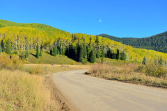County road through yellow and green aspen during foliage season Royalty Free Stock Images