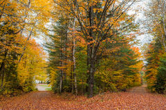 County roads in late October color. Stock Image