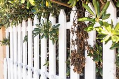 County style white wooden fence. White fence in perspective stock photos