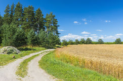 Countyside road near a field of ripening rye Royalty Free Stock Photography