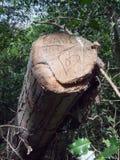 Coupé en bas de l'arbre a découpé dans et écrit au moment avec un amour Hea Photo libre de droits