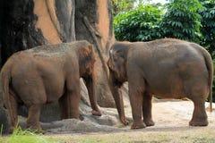 Coupé von Elefanten Stockfotografie
