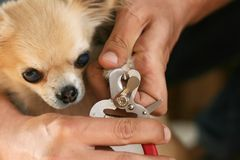 Coupage des griffes d'un chien image stock