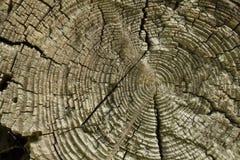 Coupe d'arbre Anneau annuel Texture photos libres de droits