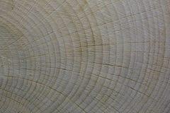 Coupe d'arbre Anneau annuel Texture photo stock