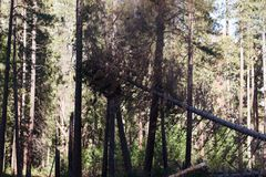 Coupe d'arbre de Yosemite en vallée de Yosemite Photo stock
