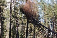 Coupe d'arbre de Yosemite en vallée de Yosemite Photos stock
