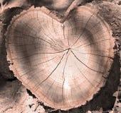 Coupe d'un arbre comme coeur Photo libre de droits
