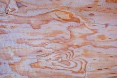 Coupe d'une structure arborescente Images stock