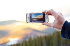 Coupe d'une structure arborescente Photographie stock libre de droits