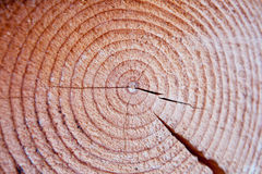 Coupe d'une structure arborescente Image libre de droits