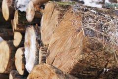 Coupe de bois de chauffage Photographie stock