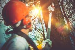 Coupe de branches d'arbre pro Photo libre de droits