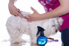 Coupe de cheveux d'animal familier Image libre de droits