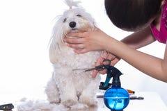 Coupe de cheveux d'animal familier Images stock