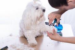 Coupe de cheveux d'animal familier Photos stock