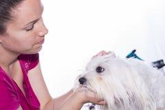 Coupe de cheveux d'animal familier Image stock