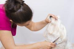 Coupe de cheveux d'animal familier Images libres de droits