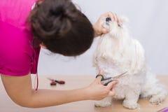 Coupe de cheveux d'animal familier Photo libre de droits