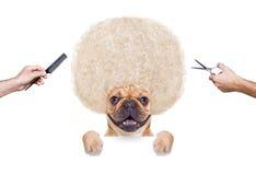 Coupe de cheveux de chien image libre de droits