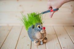 Coupe de cheveux, hérisson avec des aiguilles d'herbe Photo libre de droits