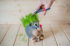 Coupe de cheveux, hérisson avec des aiguilles d'herbe Photos stock